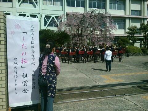 shidaresakura2015a.jpg